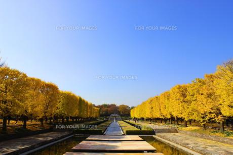 昭和記念公園の紅葉の写真素材 [FYI00232081]