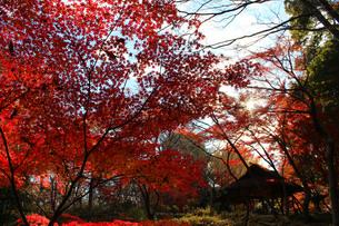 六義園の紅葉の写真素材 [FYI00232095]