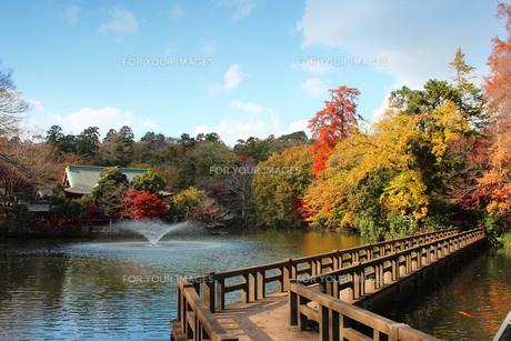 井の頭公園の紅葉の写真素材 [FYI00232098]