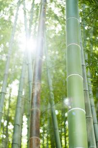 竹の写真素材 [FYI00232260]