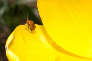 ウリハ虫の写真素材 [FYI00232312]