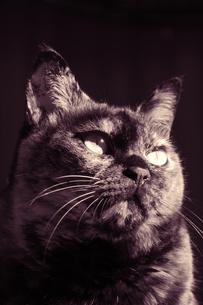 猫の素材 [FYI00232333]