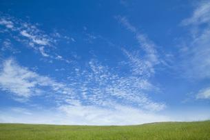 青空の下の草原の素材 [FYI00232344]