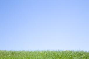 草原と空の素材 [FYI00232545]