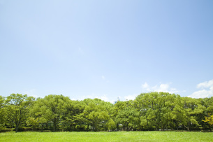 青空の下の公園の素材 [FYI00232549]