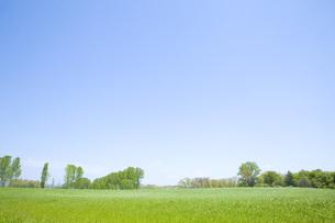 草原と空の素材 [FYI00232554]