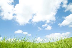 草原と空の素材 [FYI00232561]
