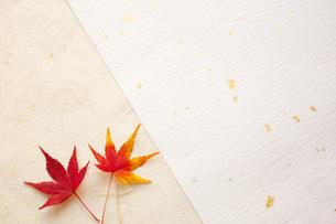 紅葉と和紙の写真素材 [FYI00232575]