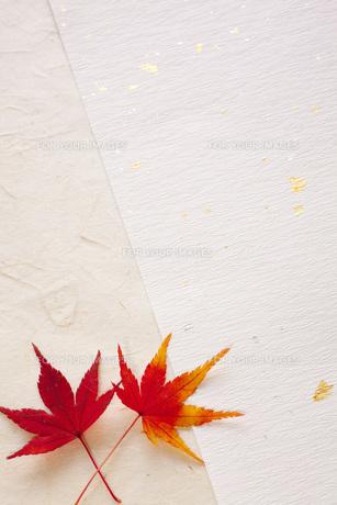 紅葉と和紙の素材 [FYI00232583]