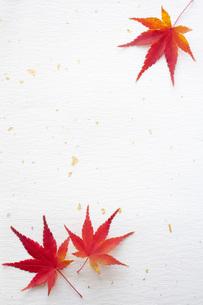 紅葉と和紙の写真素材 [FYI00232589]