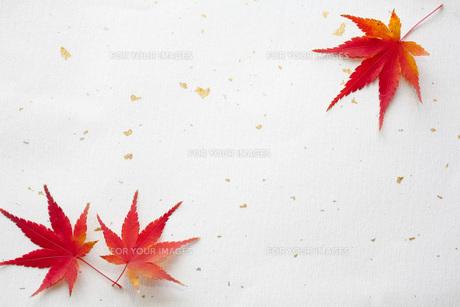 紅葉と和紙の素材 [FYI00232592]