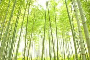 竹林の素材 [FYI00232596]