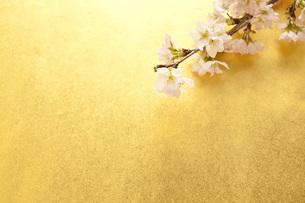 桜と和紙の写真素材 [FYI00232603]