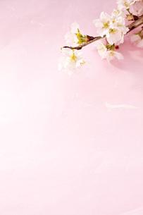 桜と和紙の写真素材 [FYI00232607]
