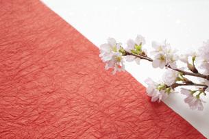 桜と和紙の写真素材 [FYI00232608]