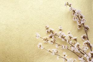 桜と和紙の写真素材 [FYI00232613]