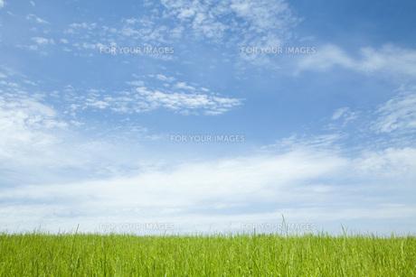 草原と空の素材 [FYI00232656]