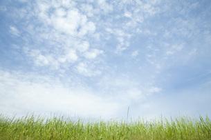草原と空の素材 [FYI00232670]