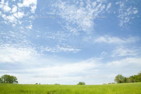 草原と空の素材 [FYI00232676]