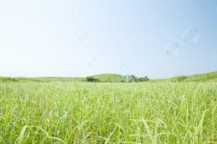 草原とシャボン玉の素材 [FYI00232829]