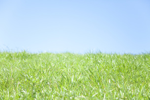 草と空の素材 [FYI00232831]