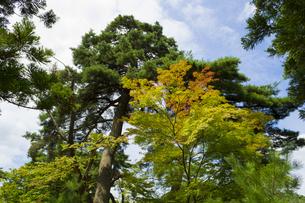 青空に訪れる秋の色の写真素材 [FYI00232916]