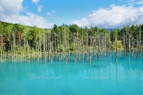 青い池の写真素材 [FYI00232926]