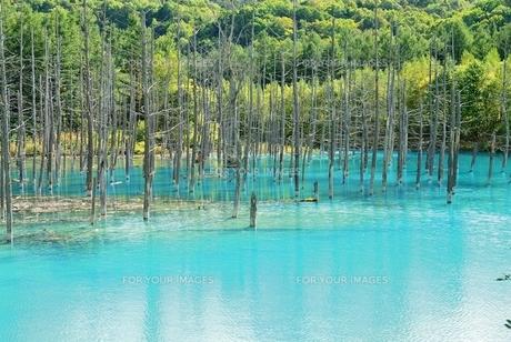 青い池の写真素材 [FYI00232932]