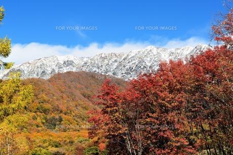 秋の大山の写真素材 [FYI00232949]