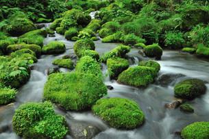 奥大山の清流の写真素材 [FYI00232955]