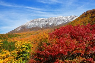 秋の大山の写真素材 [FYI00232957]