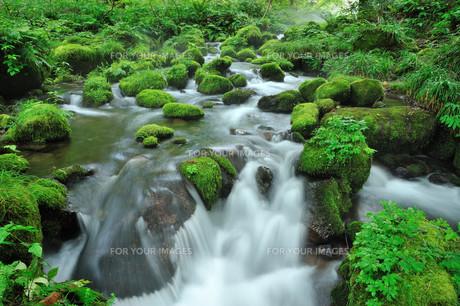 奥大山の清流の写真素材 [FYI00232972]