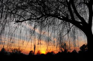 夕焼けと木の影の写真素材 [FYI00233051]