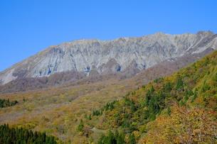 大山の紅葉の写真素材 [FYI00233279]