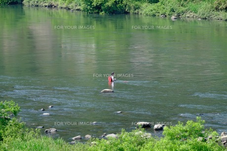江の川でのアユ釣りの写真素材 [FYI00233830]