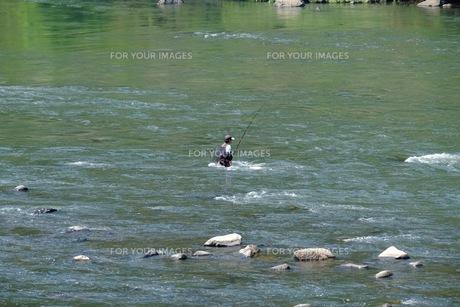 江の川でのアユ釣りの写真素材 [FYI00233831]