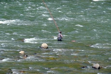 江の川でのアユ釣りの写真素材 [FYI00233860]