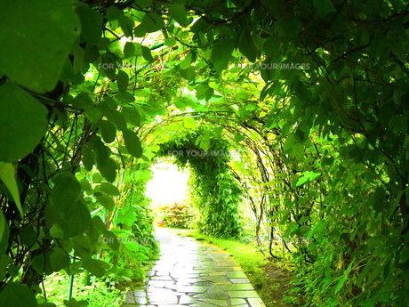 雨上がりの新緑トンネルの写真素材 [FYI00233862]