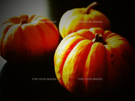 ハロウィンのカボチャの写真素材 [FYI00233986]