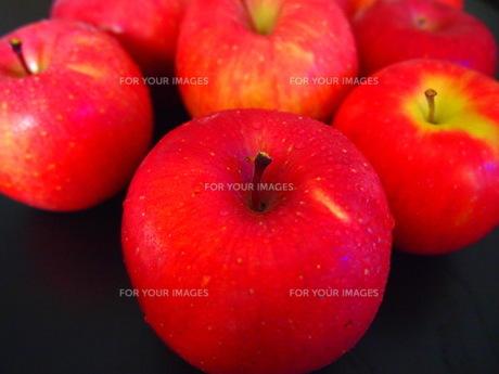 りんごの写真素材 [FYI00234052]