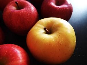 青りんごと赤りんごの写真素材 [FYI00234054]
