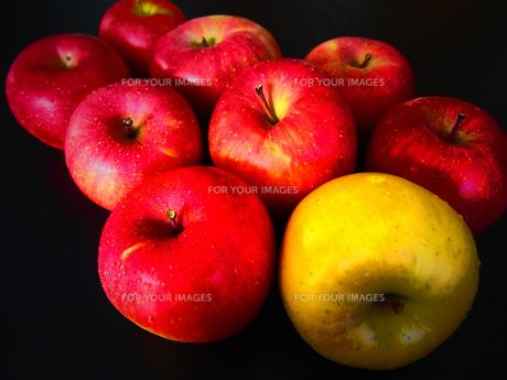 赤りんごと青りんごの写真素材 [FYI00234056]