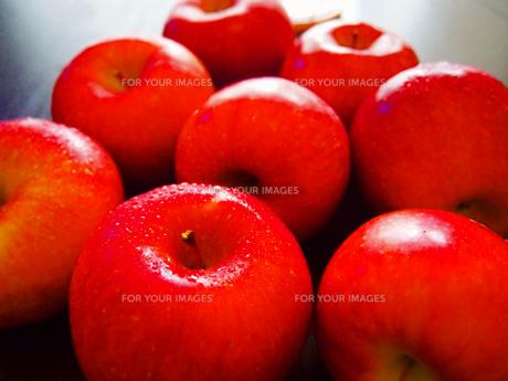 赤りんごの写真素材 [FYI00234057]