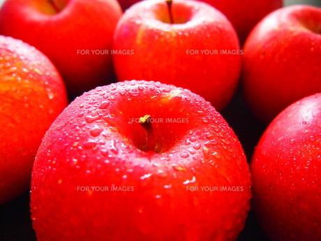 りんごの写真素材 [FYI00234058]