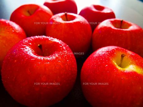 りんごの写真素材 [FYI00234059]