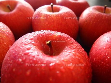 りんごの写真素材 [FYI00234069]