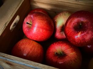 木箱の中のりんごの写真素材 [FYI00234070]