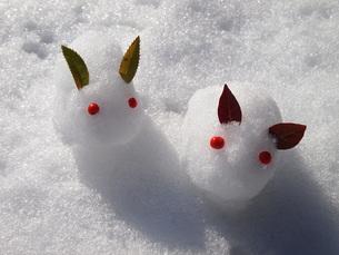 雪ウサギの写真素材 [FYI00234108]