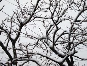 雪景色の写真素材 [FYI00234115]