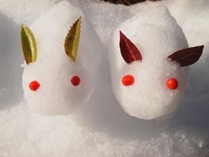 雪ウサギの写真素材 [FYI00234127]